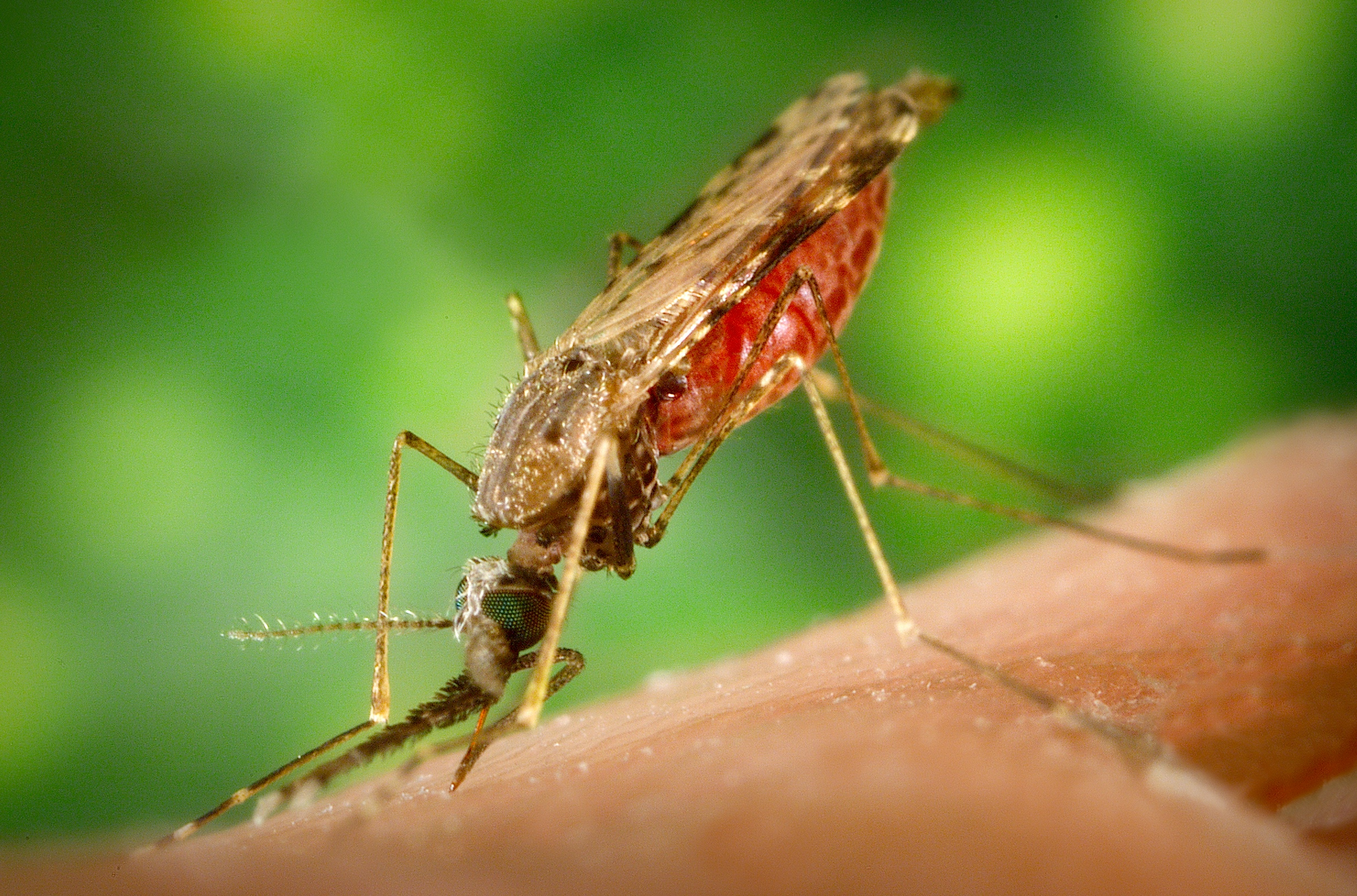 Sneaky Mutations in the Fight Against Malaria